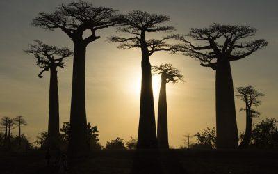Partir à la découverte de Madagascar, la grande île de l'Océan Indien
